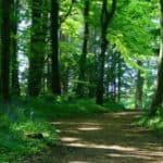 Personal Story – Thetford Forest
