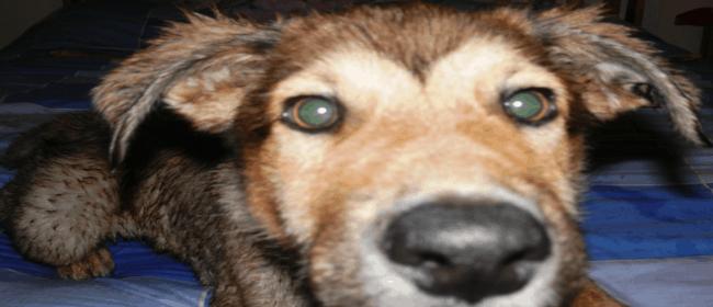 Sharing the Joy – Bear's Arrival