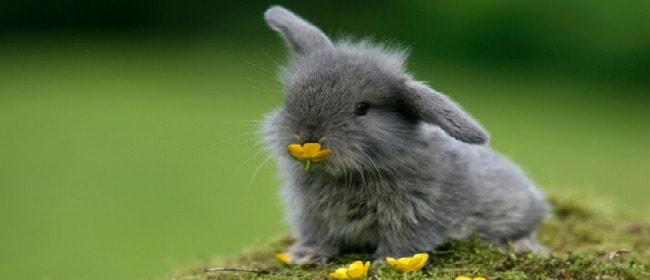 bunny-eating