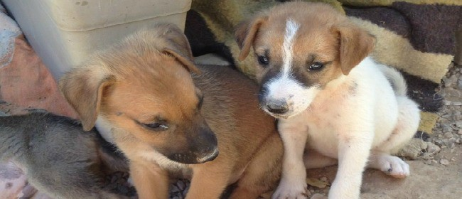 HOLISTIC CHARITY FUNDRAISER ~ Online Sale ~ Pounds for Puppies