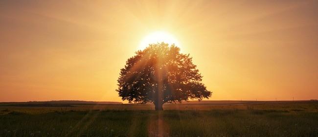 landscape-nature-lonely-tree-beautiful-scene-magical-sunrise-grass-field-landscape-nature-solitary-tree-a-beautiful-scene-a-magical-sunrise-grass-field