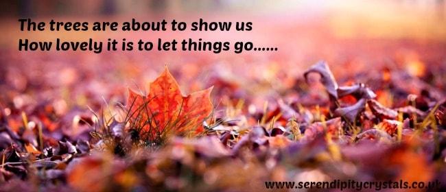 6955330-macro-leaves-leaf-fall-autumn-nature